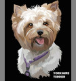 coloful portrait of yorkshire terrier vector image vector image