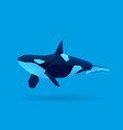 orca vector image