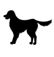 silhouette of golden retriever isolated on white vector image vector image