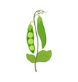 colorful green peas isolated vector image vector image