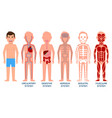 five systems human body vector image