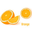 orange fruit isolated on white background vector image