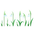 set of snowdrop flowers vector image