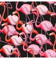 Colorful flamingo seamless background vector image vector image