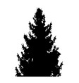 fir-tree with cones silhouette isolated on white vector image vector image