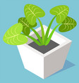 house plant in pot evergreen leaves potted flower vector image