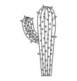 monochrome silhouette of cactus with big branch vector image vector image