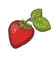 strawberry berry fruit sketch vector image vector image