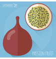 Passion fruit icon vector image vector image