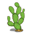 large green prickly cactus in cartoon style vector image