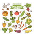 set of colored vegetables vector image