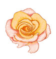 digital painting of flower vector image vector image