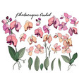 isolated orchid phalaenopsis on white vector image vector image
