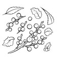 mistletoe coloring book set vector image