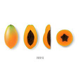 papaya collection vector image