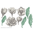 set hand drawn pastel magnolia flowers vector image