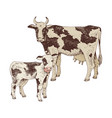 spotted cow and calf farm animals familie vector image
