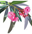 Tropic flowers branch vector image vector image