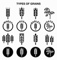 Types of grains cereals icons - wheat rye vector image vector image