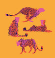 graphic collection of cheetahs drawn with rough vector image vector image