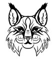 lynx head sketch graphics monochrome vector image