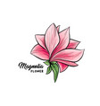 magnolia flowers hand drawn vector image