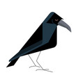 old wise raven vector image