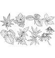 set branches and leaves hand drawn design vector image vector image