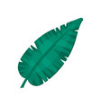 banana leaf tropical palm leaf vector image