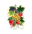 Garnet figs grapes painting on white background vector image vector image