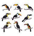 toucan bird icons exotic tropical animals vector image vector image