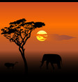 elephant and lion at sunset