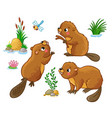 set with isolated beavers in different vector image
