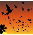 Sunset birds silhouettes vector image vector image
