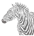 Animal of black zebra striped vector image vector image