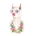lama showing tongue fun sunglasses flowers animal vector image vector image