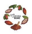 Round frame decoration element of cacao fruit vector image vector image