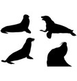sea lions silhouettes in black on white vector image vector image