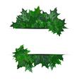 Summer maple leaves
