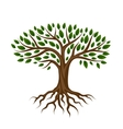 Abstract stylized tree with roots and leaves vector image vector image