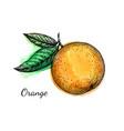 ink sketch orange on watercolor background vector image