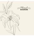 Lily flower isolated over white vector image vector image