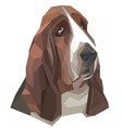 portrait basset-hound in a geometric style vector image vector image