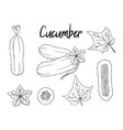 set of hand-drawn cucumbers monochrome isolated vector image vector image