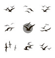 set of seagulls vector image