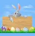 easter bunny and wooden sign vector image vector image