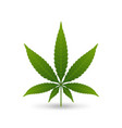 hemp cannabis leaf on white background vector image