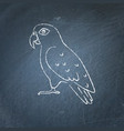 pionus parrot icon sketch on chalkboard vector image vector image