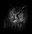 long-eared owl black and white graphic hand-drawn vector image