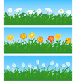 spring flowers and grass vector image